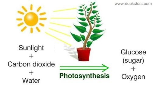 What is the chemical reaction of photosynthesis quora the equation of photosynthesis is as follows publicscrutiny Gallery