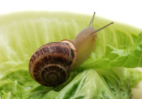 only 1 Snail Orange!! Spare Part PLEASE READ Tempo Small Snail Game!!