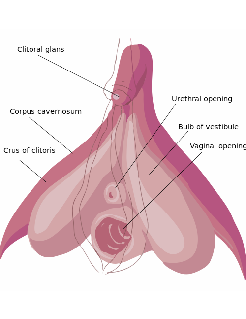 Removal of clitoris in women