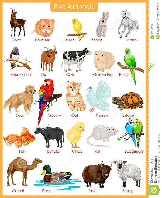 What Are The Differences Between Medicine And Veterinary