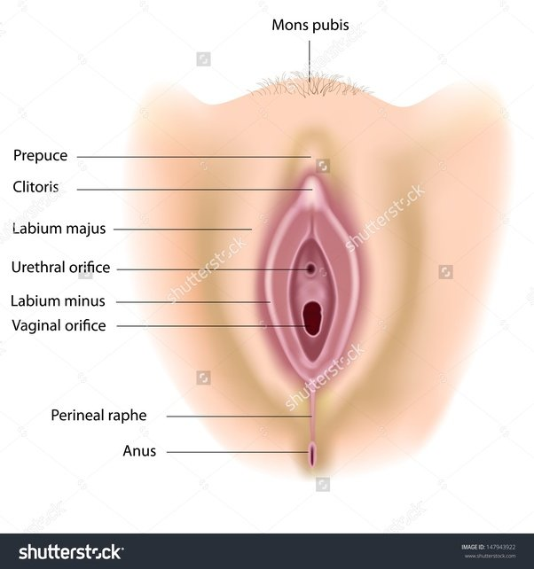 Wheres the sex hole