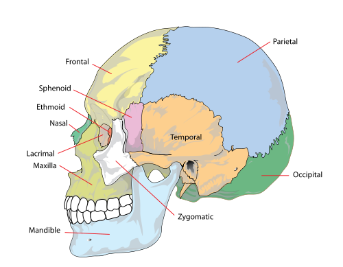 What Do Headaches In Different Parts Of The Head Mean Quora