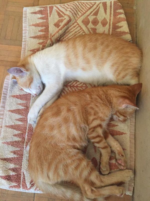 Adakah Gambar Kucing Oren Yang Ingin Kamu Bagikan Quora