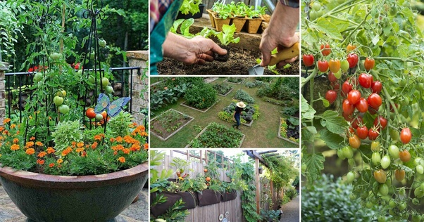 What Is The Best Way To Start Planting A Vegetable Balcony Garden