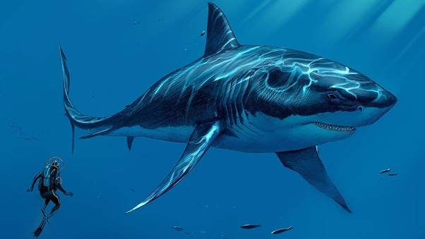 Bigger Than Megalodon Shark Toy : Was there an animal which can defeat megalodon quora