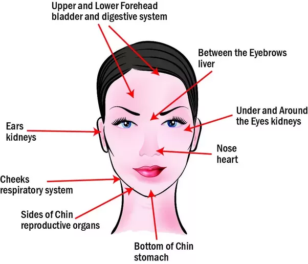 How Did They Find Out The Acne Face Map Quora - Chinese face map for acne