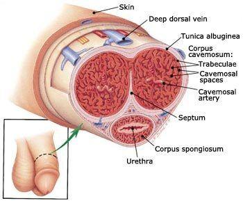 Swollen penis vein and masturbation
