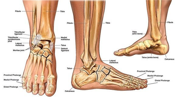 How to treat a broken ankle? How long does it take to heal - Quora