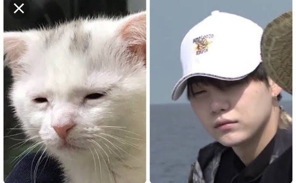 Is It True That Every Yoongi Picture Has A Similar Cat Picture Quora
