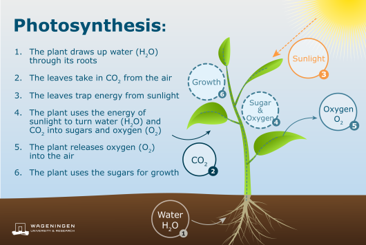 What Is The Source Of Energy For Photosynthesis Quora