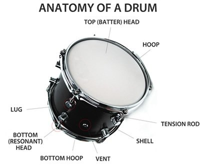 Drum It Into Your Head : how do the size and shape of a musical instrument affect the pitch quora ~ Vivirlamusica.com Haus und Dekorationen