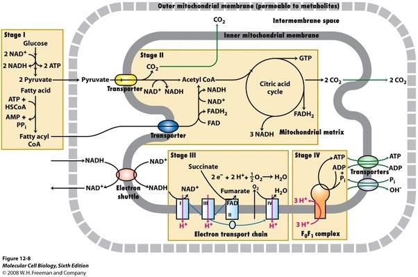 biology enzyme summary