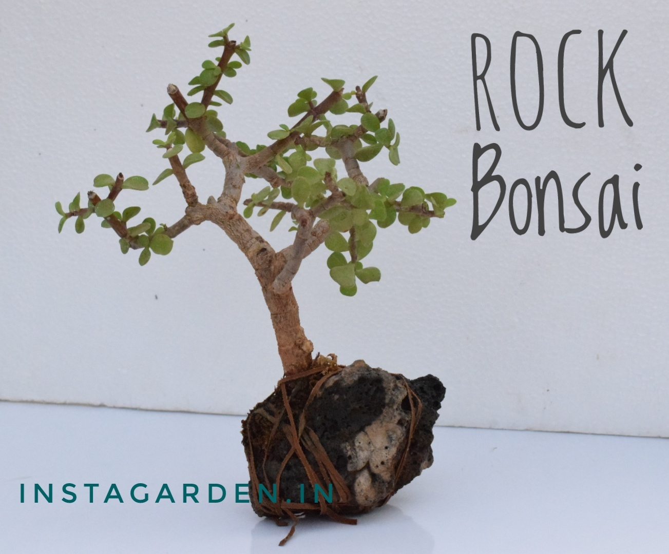 Where can I buy bonsai plants and pots in Hyderabad? - Quora on gardens in srinagar, gardens in tokyo, gardens in india, gardens in lahore, gardens in bangalore, gardens in nairobi, gardens in kashmir, gardens in seoul, gardens in beijing, gardens in bangkok,