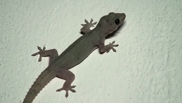 What are good ways to keep lizards out of your house? - Quora