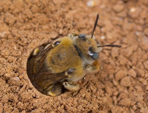 How to naturally get rid of ground bees - Quora