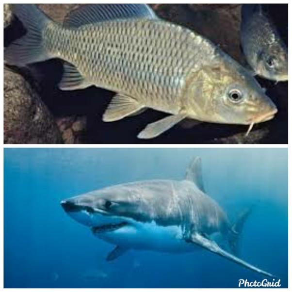 Apakah Ikan Air Tawar Bisa Hidup Di Air Asin Quora