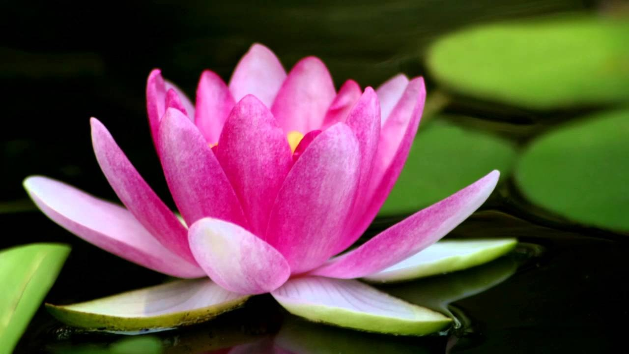 Does Anyone Here Chant Nam Myoho Renge Kyo Without Being Part Of