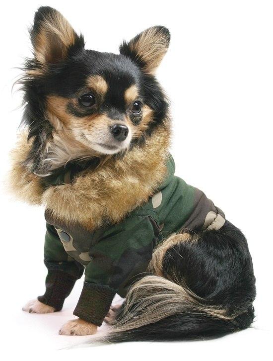 do dogs need winter coats quora. Black Bedroom Furniture Sets. Home Design Ideas
