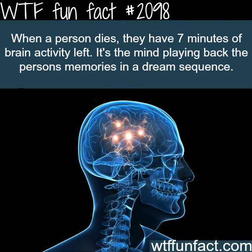 Science Facts Brain: What Are Some Interesting Psychological Facts About Human