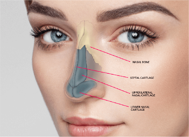 What Is Rhinoplasty And What Are The Benefits Of It Quora