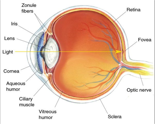 What Is The Purpose Of Eye Diagrams
