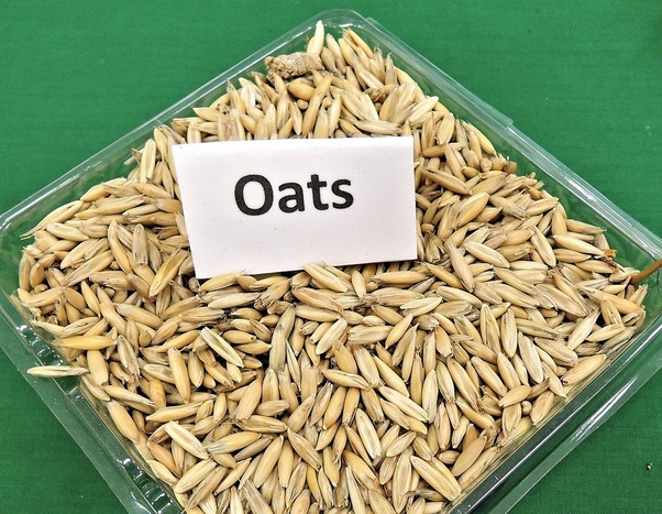 Which Is Healthier  Wheat Or Oats