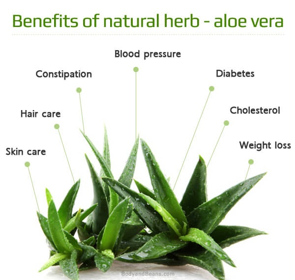 Pradeep Chaudhary's answer to What are the benefits of using aloe vera gel as a hair gel?