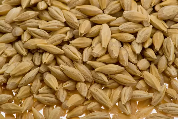 what is the difference between barley and malt quora