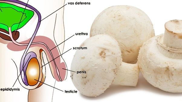 White Button Mushrooms Are Good For Health Quora