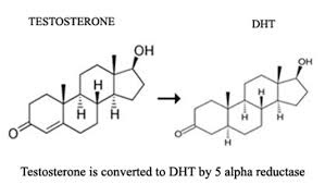 Is dht a steroid latest research on anabolic steroids