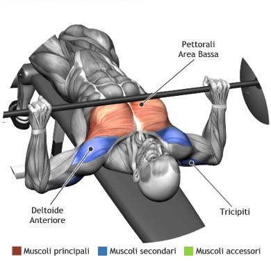 Strange What Factors Can Affect How Much You Bench Press Quora Lamtechconsult Wood Chair Design Ideas Lamtechconsultcom