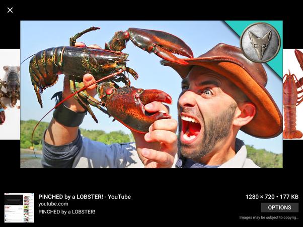 Why are lobsters invertebrates? - Quora