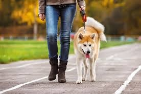 dog walking business has become one of the on demand services in the recent past many dog owners are finding it difficult to manage time to take their pets