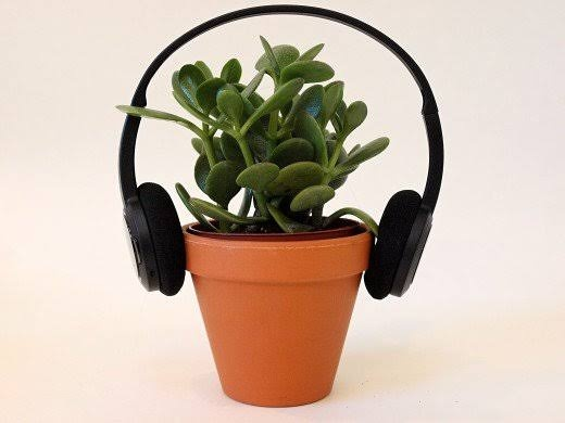 how does music affect plant growth articles