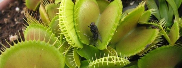 Examples Of Insectivores What are insectivorous...
