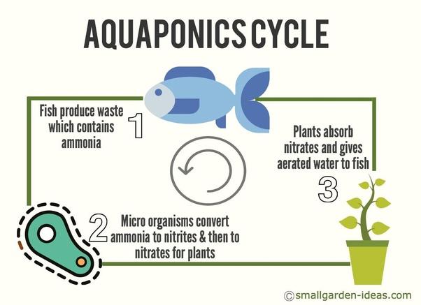 How is aquaponics profitable in India? - Quora