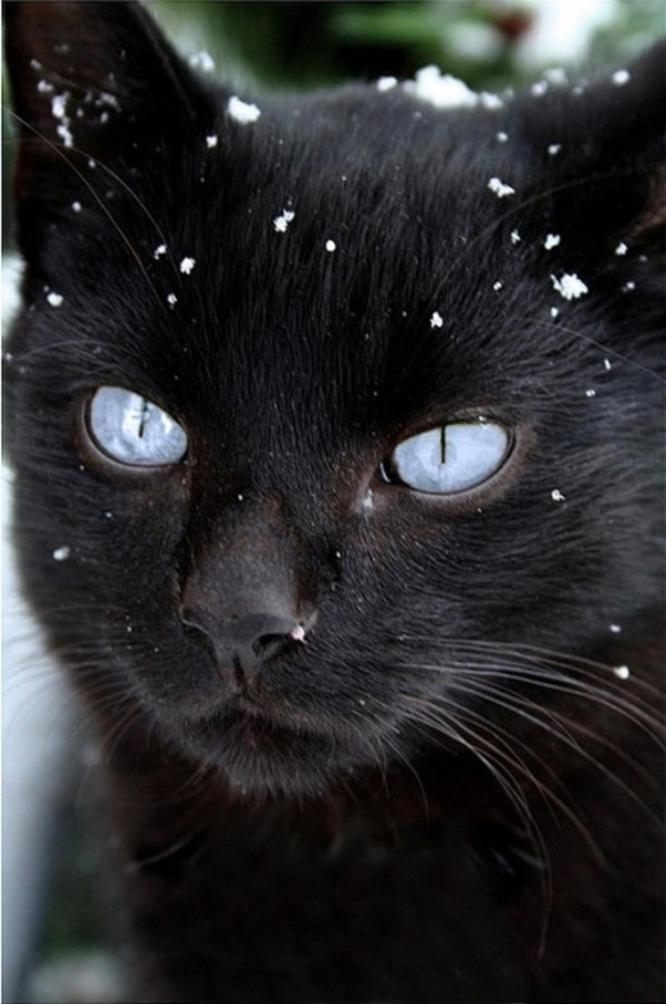 Why do most black cats have yellow eyes? - Quora