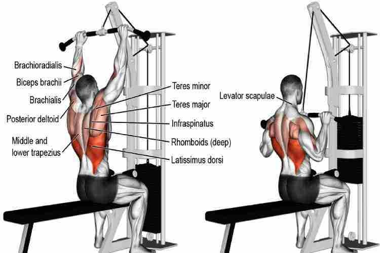 Wide-Grip Lat Pulldown, back workout for a beginner