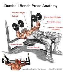 So I Would Suggest You To Incorporate Both Barbell And Dumbbell Bench Press In Your Chest Workout For Better Overall Development
