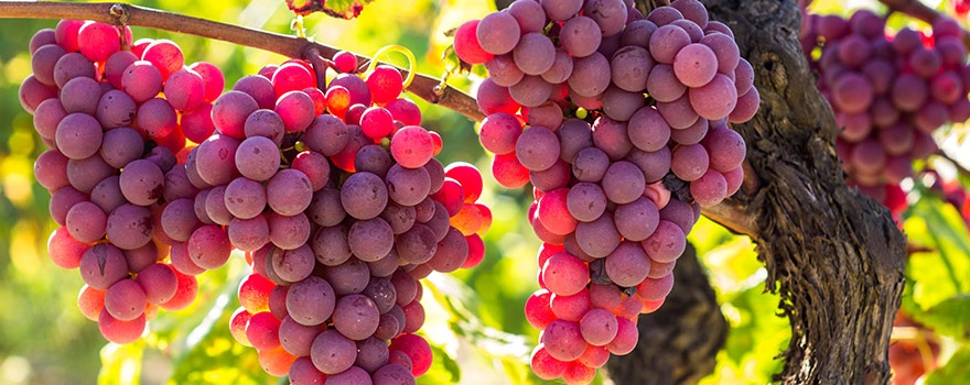 What is the difference between white, rose, and orange wine? - Quora