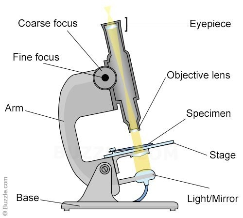 What do you mean by objective and eyepiece lens in a microscope quora ccuart Choice Image