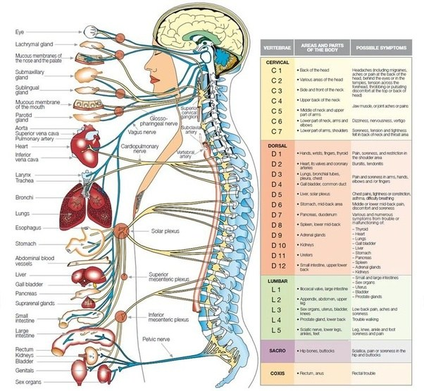 What Organs Are Affected After A Spinal Cord Injury Quora
