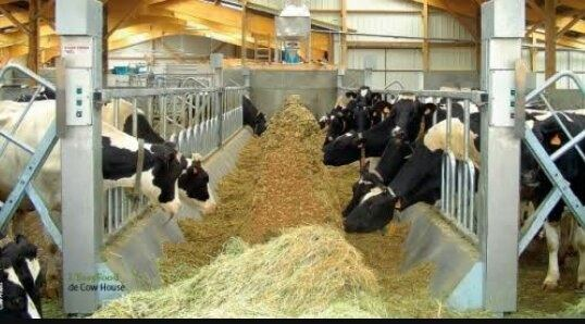 What Is A Good Cowshed Design For 10 Cows