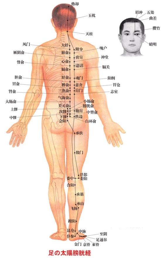 下 背中 甲骨 肩 の の 左側 痛み