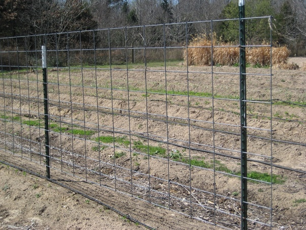 2x4 welded wire fence inexpensive and 2x4 welded wire fencing the panels are for strength rigidity the is because young pig can fit through holes in panels what kind of fence do need to keep pig quora