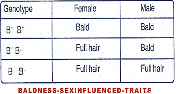 Is baldness sex linked gene