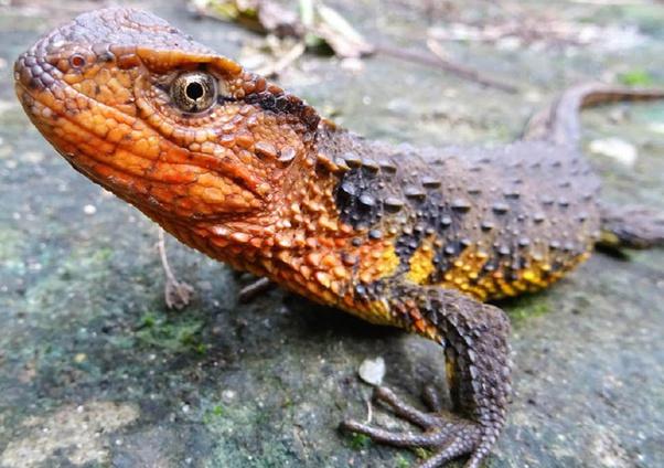 Apakah dinosaurus termasuk hewan reptil atau unggas? - Quora