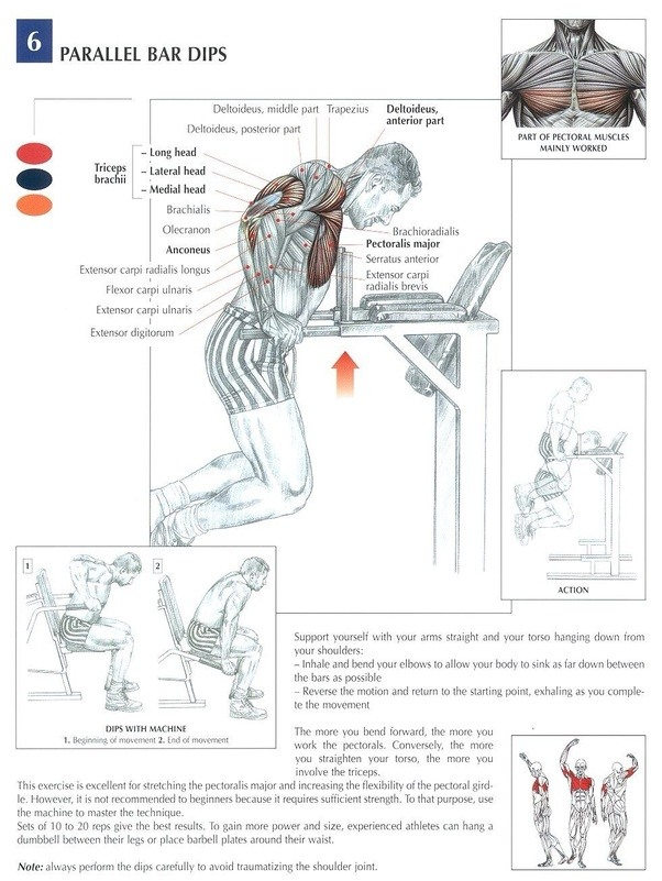 What Is The Best Way To Increase Triceps Size Quora