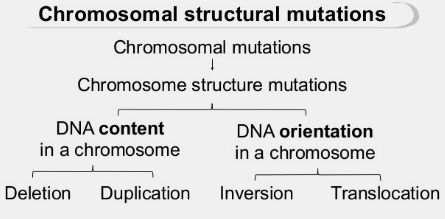 what are the four chromosomal mutations