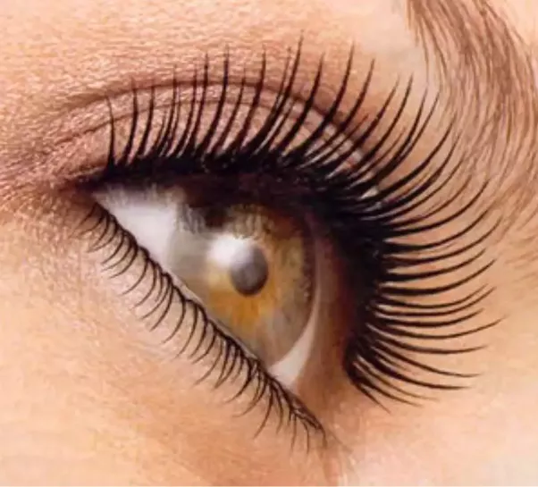 Which Oil Is Best For Eyelashes Quora